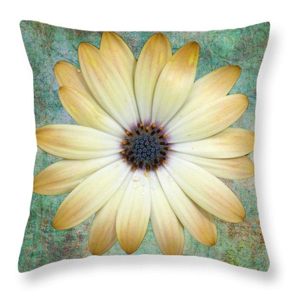 Cream Coloured Daisy Throw Pillow by Chris Thaxter