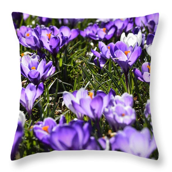 Crocus In Bloom Throw Pillow by Thomas R Fletcher