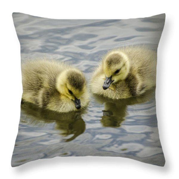 Curiosity Throw Pillow by Heather Applegate