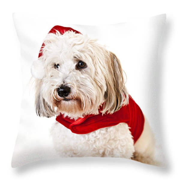 Cute dog in Santa outfit Throw Pillow by Elena Elisseeva