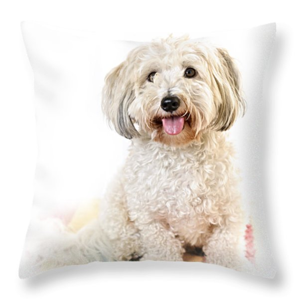 Cute dog portrait Throw Pillow by Elena Elisseeva