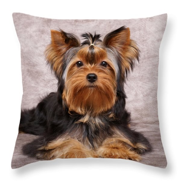 Cute puppy Throw Pillow by Konstantin Gushcha
