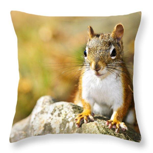 Cute Red Squirrel Closeup Throw Pillow by Elena Elisseeva