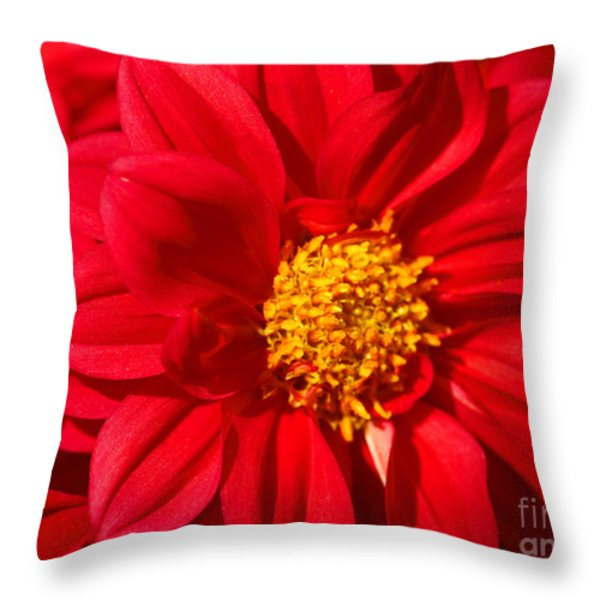 Dahlia Throw Pillow by Cheryl Young