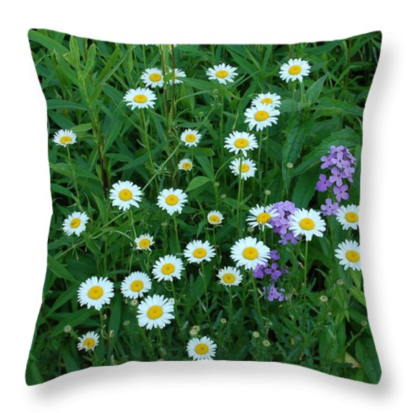Daisies Throw Pillow by Aimee L Maher Photography and Art