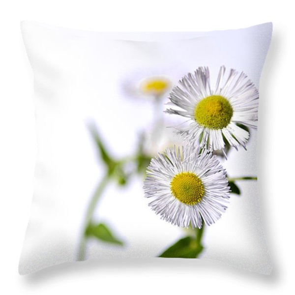 Dancing Daisy Throw Pillow by LeeAnn McLaneGoetz McLaneGoetzStudioLLCcom