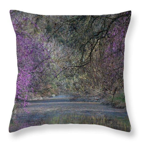 Davis Arboretum Creek Throw Pillow by Agrofilms Photography