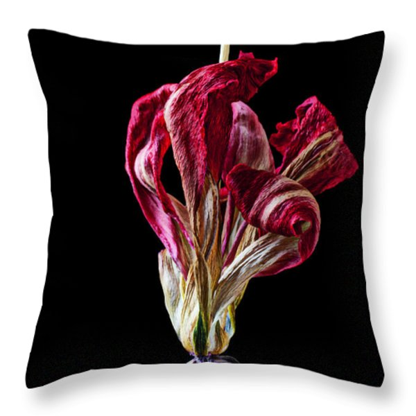 Dead Dried Tulip Throw Pillow by Garry Gay