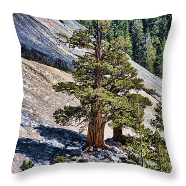 Deep Roots Throw Pillow by Bonnie Bruno