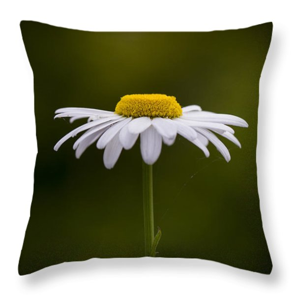 Defiant Daisy Throw Pillow by Clare Bambers