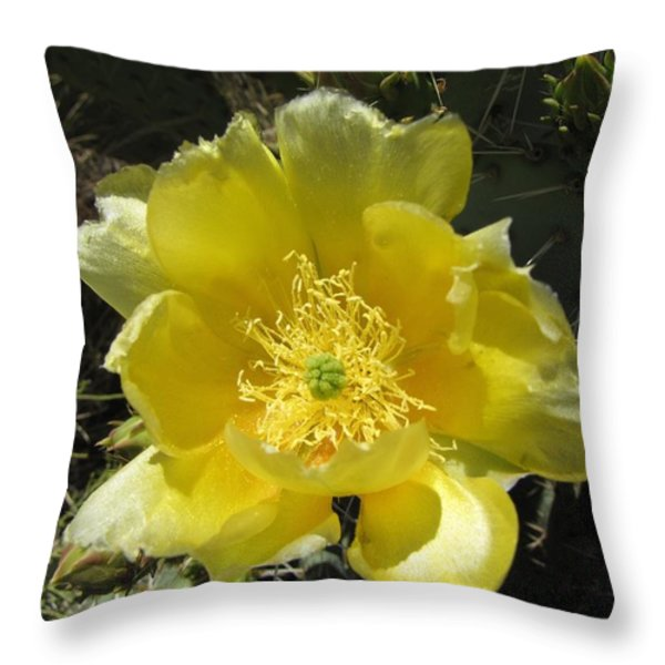 Delicate Desert Flower Throw Pillow by FeVa  Fotos