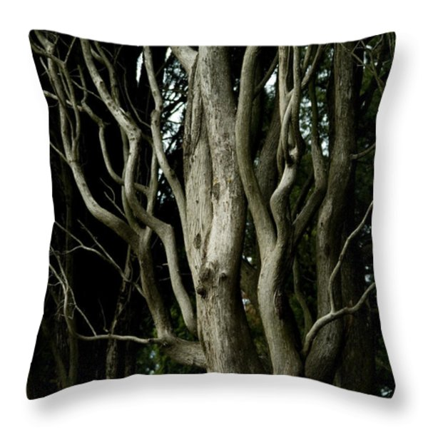 Detailed View Of The Branches Of A Tree Throw Pillow by Todd Gipstein