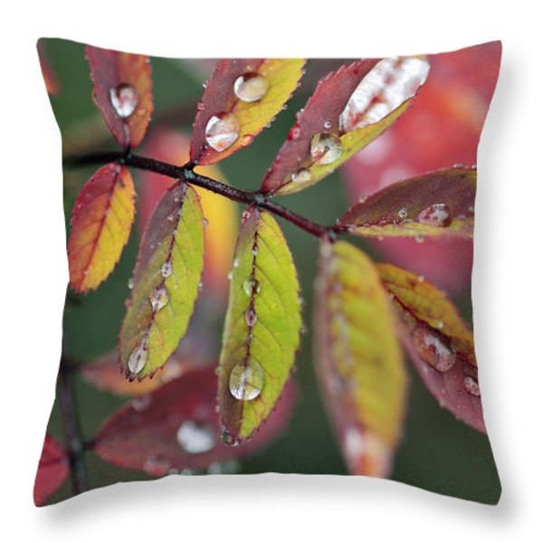 Dew On Wild Rose Leaves In Fall Throw Pillow by Darwin Wiggett