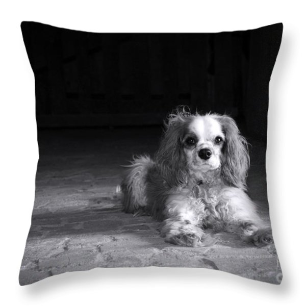 Dog black and white Throw Pillow by Jane Rix