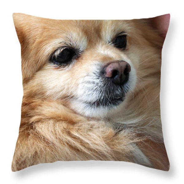 Dog First Throw Pillow by Charline Xia