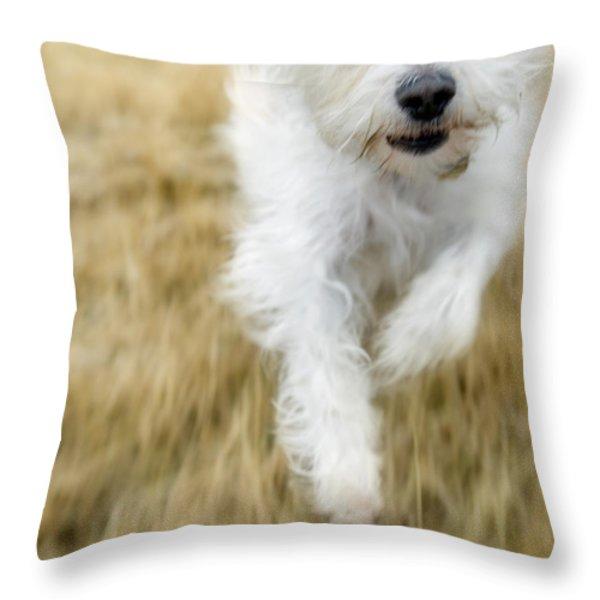 Dog Running Throw Pillow by Darwin Wiggett