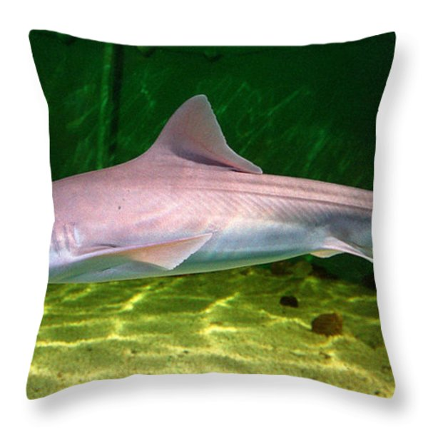 dogfish shark in aquarium Throw Pillow by Matt Suess