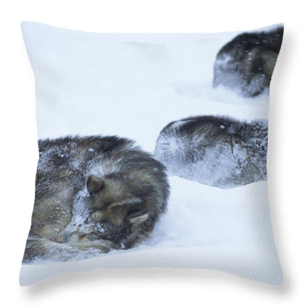 Dogs Sleep In Blizzard On Frozen Ocean Throw Pillow by Gordon Wiltsie