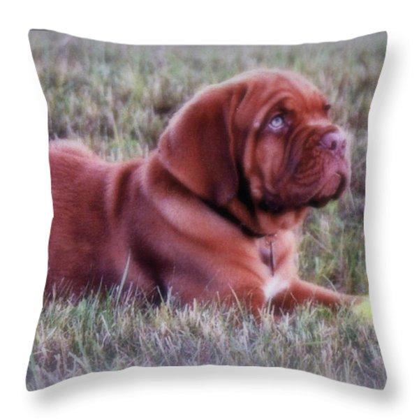 Dogue De Bordeaux Throw Pillow by Kay Novy