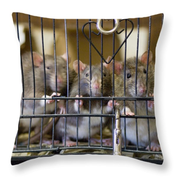 Domestic Rats At The Sutton Avian Throw Pillow by Joel Sartore