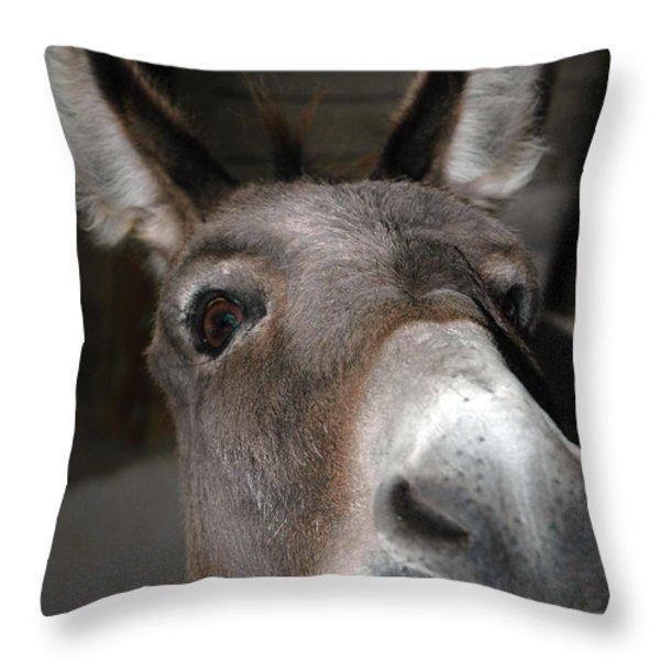 Donkey Sniffs Throw Pillow by LeeAnn McLaneGoetz McLaneGoetzStudioLLCcom