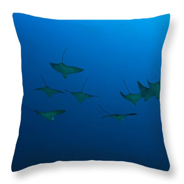 Eagle Rays in Ocean Throw Pillow by Dave Fleetham - Printscapes
