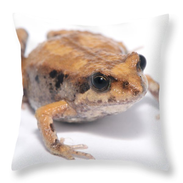 Eastern Banjo Frog Isolated On White Throw Pillow by Brooke Whatnall
