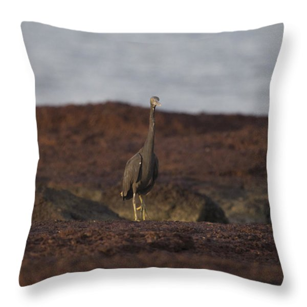 Eastern Reef Egret-Dark Morph Throw Pillow by Douglas Barnard