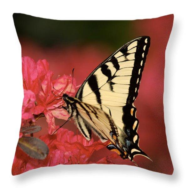 Eastern Yellow Tiger Swallowtail And Azaleas Throw Pillow by Lara Ellis