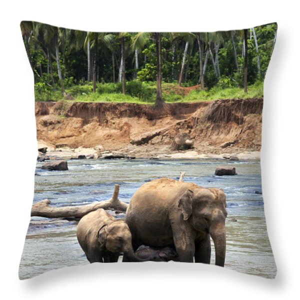 Elephant family Throw Pillow by Jane Rix