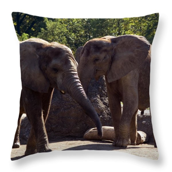 Elephants At The Pittsburgh Zoo Throw Pillow by Stacy Gold