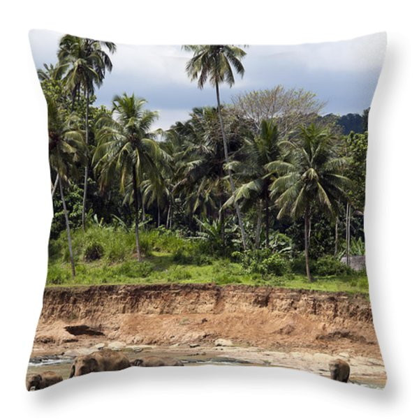 Elephants in the river Throw Pillow by Jane Rix