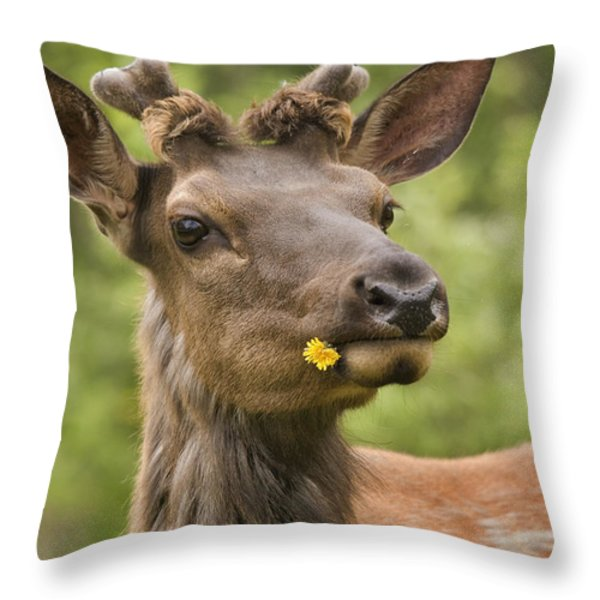 Elk Cervus Canadensis With Dandelion In Throw Pillow by Philippe Widling