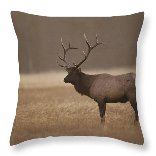 Elk Or Wapiti Bull At Sunset Throw Pillow by Raymond Gehman
