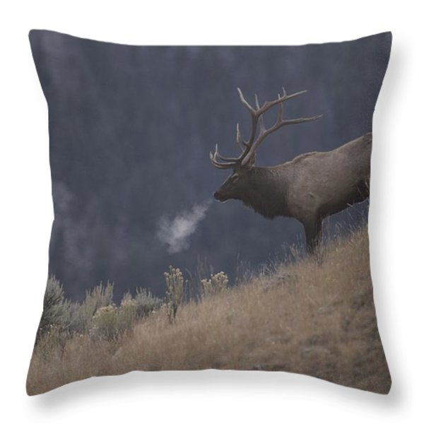Elk Or Wapiti Bull On A Hillside Throw Pillow by Raymond Gehman