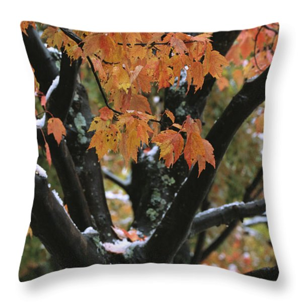 Fall Foliage Of Maple Tree After An Throw Pillow by Tim Laman