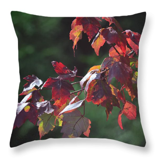 Fall Red Throw Pillow by Sandi OReilly
