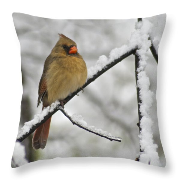 Female Cardinal 3656 Throw Pillow by Michael Peychich
