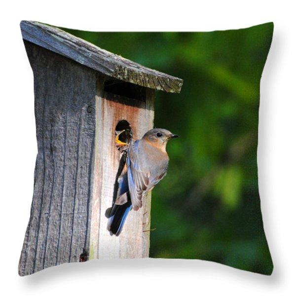 Female Eastern Bluebird IIi Throw Pillow by Jai Johnson