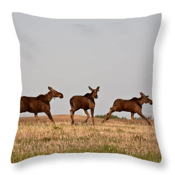 Female Moose With Male Calves In Saskatchewan Field Throw Pillow by Mark Duffy