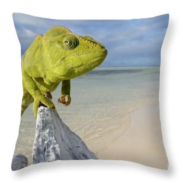 Female Oustalet's Chameleon Throw Pillow by Alex Rosenfield and Photo Researchers