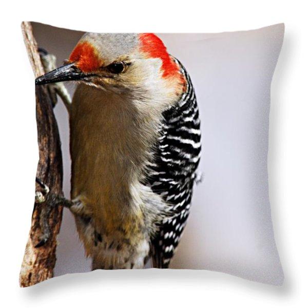 Female Red-bellied Woodpecker 3 Throw Pillow by Larry Ricker