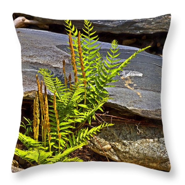 Fern And Rocks Throw Pillow by Susan Leggett