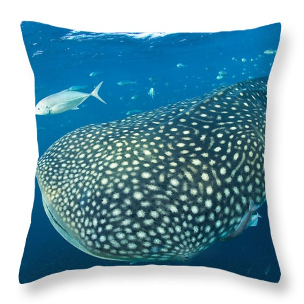 Fish Following A Whale Shark Throw Pillow by Paul Nicklen