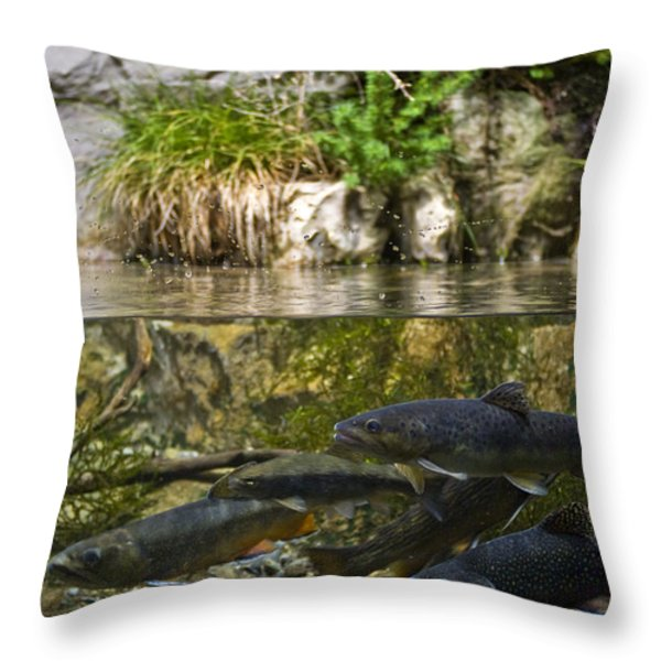 Fish Swimming In An Aquarium Throw Pillow by Todd Gipstein