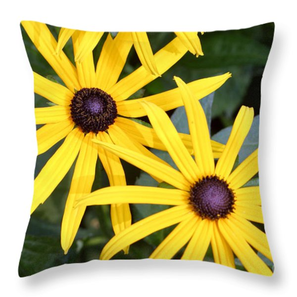 Flower Rudbeckia Fulgida In Full Throw Pillow by Ted Kinsman