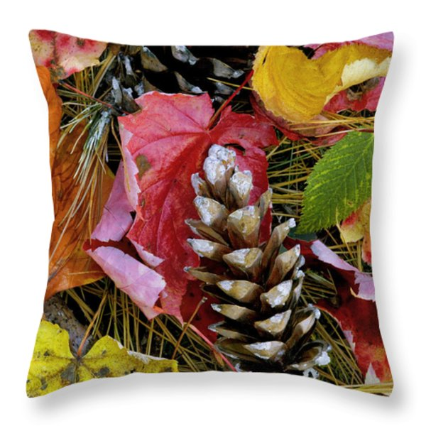 Forest Floor Portrait Throw Pillow by Rich Franco