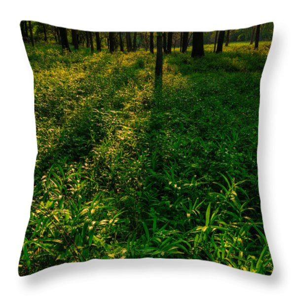 Forest Sunset Throw Pillow by Steve Gadomski