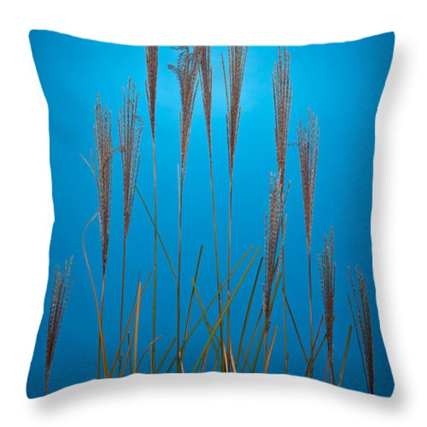 Fountain Grass In Blue Throw Pillow by Steve Gadomski