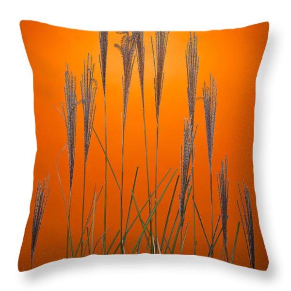 Fountain Grass In Orange Throw Pillow by Steve Gadomski